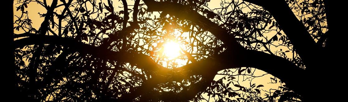 branches contraste qu est ce qun parc