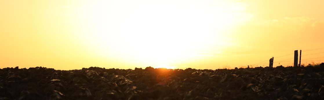 champs soleil