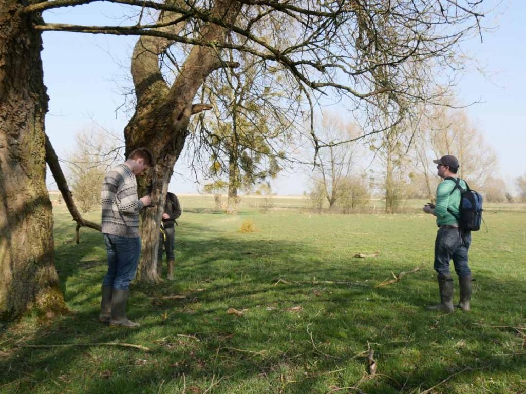 agents et arbres