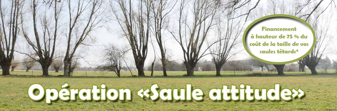 image saule attitude article copie