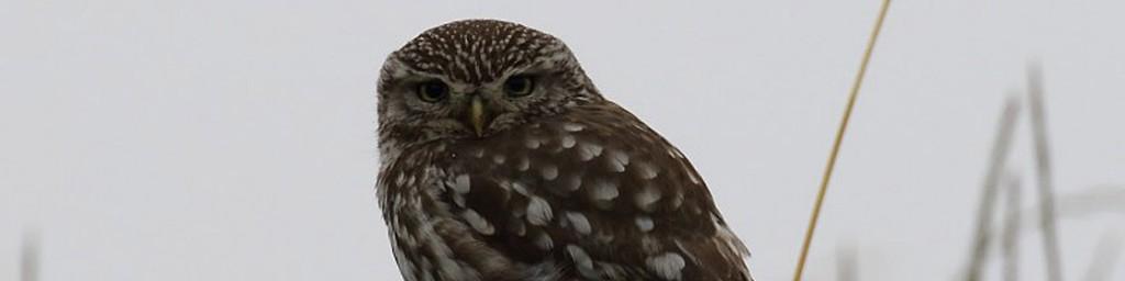 oiseau-recadre