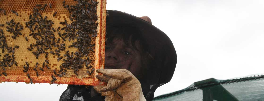 nathalie apiculture